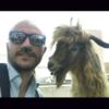 tutor a TORINO - Cosimo